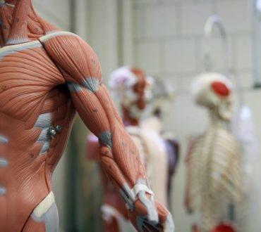 Διαμέσιο: Επιστήμονες ανακάλυψαν ένα νέο σημαντικό όργανο στο ανθρώπινο σώμα!