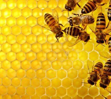 Έρευνα καταλήγει πως οι κυψέλες των μελισσών παρουσιάζουν ομοιότητες με τον ανθρώπινο εγκέφαλο