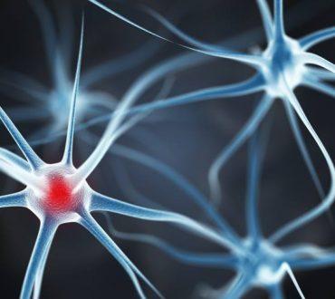 Πρωτοποριακή μελέτη δείχνει ικανή τη θεραπεία από εγκεφαλικό επεισόδιο με επέμβαση στα γονίδια του εγκεφάλου