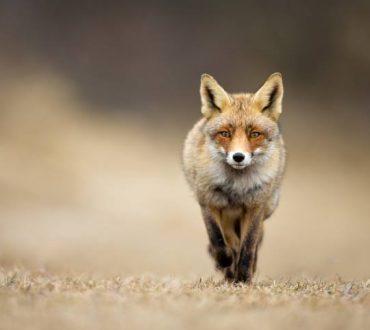 Η αλεπού και η μάσκα: Μια ιστορία για την εξωτερική ομορφιά