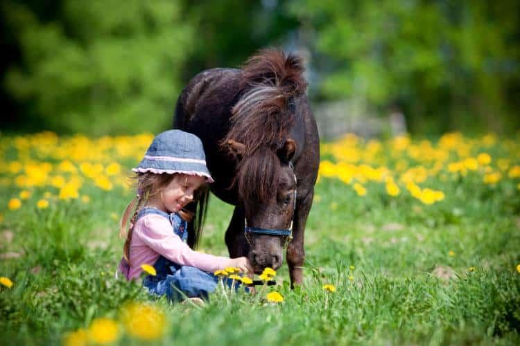 Πώς τα άλογα αντιλαμβάνονται και ανταποκρίνονται στο ανθρώπινο συναίσθημα