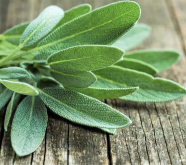 10 βότανα που προσφέρουν υγεία, ευημερία και πνευματική προστασία