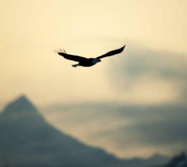 Ελευθερία είναι η ικανότητα να επιλέγουμε το δικό μας νόημα και σκοπό ζωής