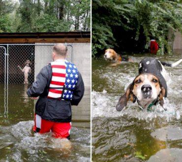 Ήρωας εθελοντής διασώζει εγκαταλελειμμένα σκυλιά που κινδύνευαν να πνιγούν από τον τυφώνα στις ΗΠΑ