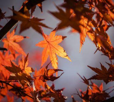 «Φθινόπωρο… το τελευταίο πιο χαριτωμένο χαμόγελο του χρόνου»: 20 αποφθέγματα για να το απολαύσουμε