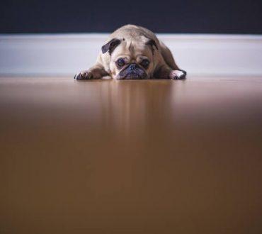 Για πόσες ώρες μπορούμε να αφήσουμε τον σκύλο μας μόνο στο σπίτι;