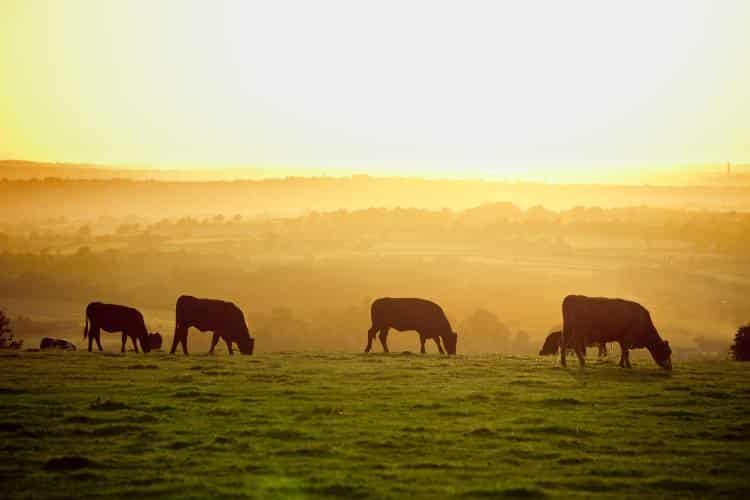 Αντοχή στα φάρμακα: Η χρήση αντιβιοτικών στα ζώα επηρεάζει την υγεία μας;