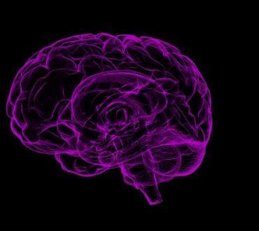 Οι επιστήμονες εντόπισαν περιοχή του εγκεφάλου που καταστέλλει το φόβο