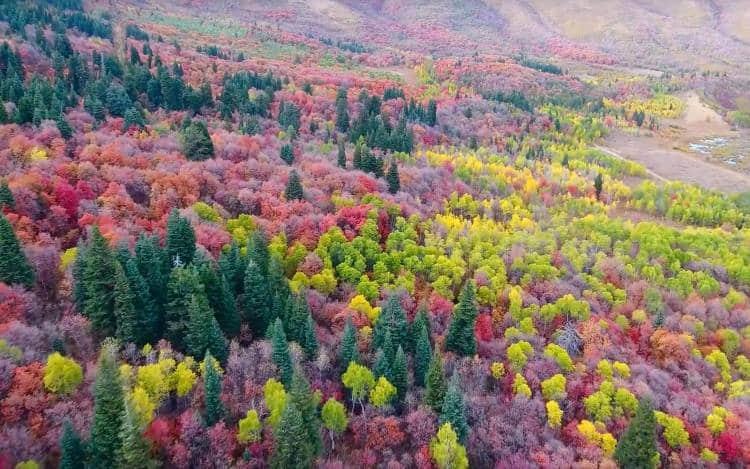 Όταν η φύση χαρίζει απλόχερα τα χρώματά της... το αποτέλεσμα μαγεύει! (βίντεο)