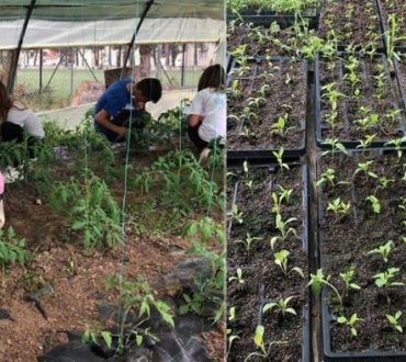 Χαλκιδική: Η εφορία κλείνει λαχανόκηπο που έφτιαξαν μαθητές Δημοτικού σχολείου