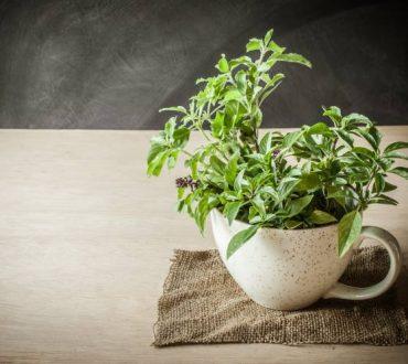 Φυτά εσωτερικού χώρου: 6 ειδή ιδανικά για χριστουγεννιάτικα δώρα