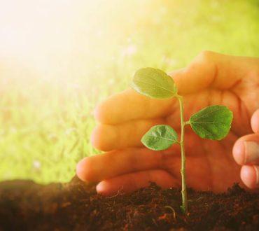 Η καλύτερη στιγμή για να φυτέψεις ένα δέντρο είναι είκοσι χρόνια πριν, αλλά η δεύτερη καλύτερη είναι σήμερα