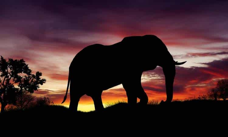 Η παροιμία του ελέφαντα: Όσο θεόρατο κι αν φαίνεται ένα πρόβλημα, μπορούμε να το λύσουμε