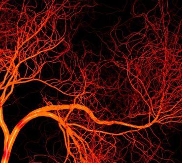 Επιστήμονες δημιούργησαν για πρώτη φορά τέλεια ανθρώπινα αιμοφόρα αγγεία