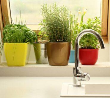 10 βότανα που μπορούμε να καλλιεργήσουμε σε εσωτερικό χώρο όλο το χρόνο