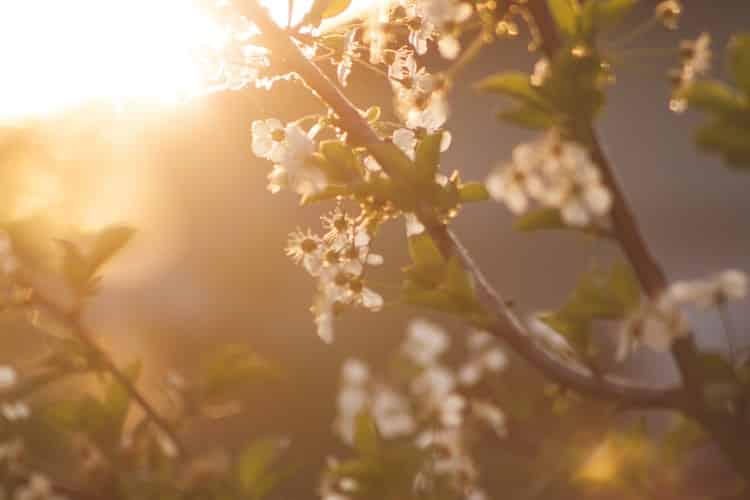 Μετάβαση από την εποχή του Χειμώνα στην εποχή της Άνοιξης: Μυστικά για καλή υγεία και ισορροπημένη ζωή