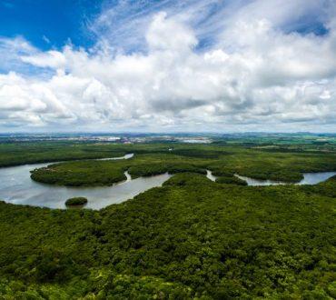 Πράσινος πλανήτης: Κίνα και Ινδία δημιούργησαν δάση στο μέγεθος του Αμαζονίου