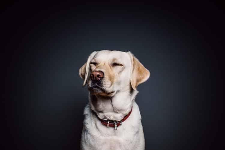 Έρευνα: Οι σκύλοι αλλάζουν χαρακτήρα με την πάροδο του χρόνου