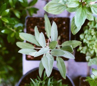 5 βότανα που μπορούμε να καλλιεργήσουμε σε εσωτερικό χώρο
