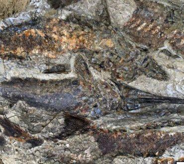 Επιστήμονες ανακάλυψαν απολιθώματα ζώων και φυτών από τη μέρα της «Αποκάλυψης»