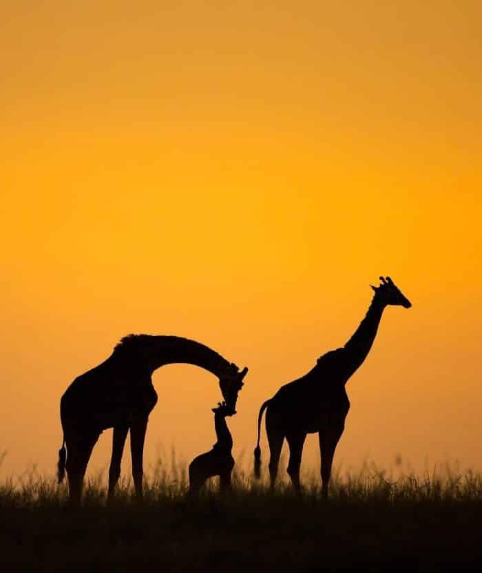 30 συναρπαστικές φωτογραφίες του Instagram που αγάπησε και επέλεξε το National Geographic