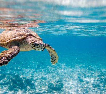 Η ανθρωπότητα «απειλεί» με εξαφάνιση 1 εκατομμύριο είδη φυτών και ζώων