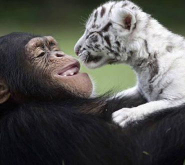 Τα ζώα έχουν ενσυναίσθηση, όπως ακριβώς και οι άνθρωποι