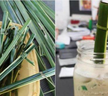 Φιλιππίνες: Καφετέρια χρησιμοποιεί καλαμάκια από φύλλα καρύδας και μειώνει τη χρήση πλαστικού