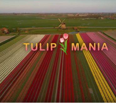 Ολλανδία: Drone ταξιδεύει πάνω από ανθισμένα λιβάδια με τουλίπες και το αποτέλεσμα μαγεύει (Βίντεο)