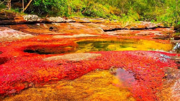 Το ποτάμι των 5 χρωμάτων σαγηνεύει τους επισκέπτες με τις μοναδικές του αποχρώσεις (φωτογραφίες)