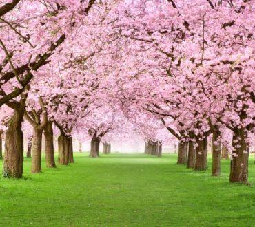 Αν δεν σ'αρέσει όπως ζεις, φτιάξε τον δικό σου παράδεισο και μπες μέσα!