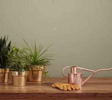 Πώς μπορούμε να μεταφυτέψουμε ένα φυτό: 7 απλά βήματα