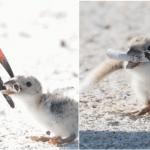 """""""Σπαρακτική"""" φωτογραφία δείχνει πουλί να ταΐζει το μικρό του με αποτσίγαρο"""