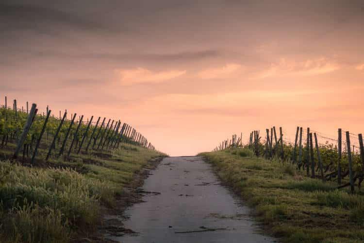 Carl Jung: Τα 4 στάδια της ζωής