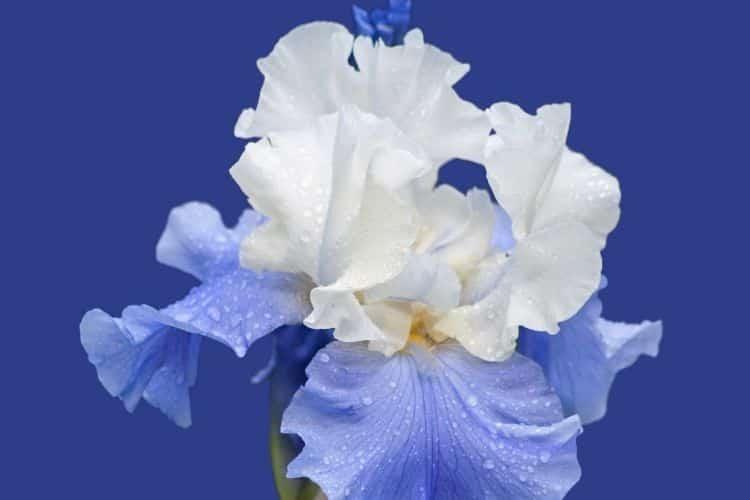 Η δύναμη των λουλουδιών: Τα καλύτερα συστατικά τους για τη φροντίδα της επιδερμίδας
