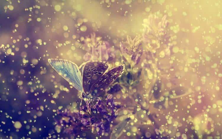 Η ευτυχία είναι σαν την πεταλούδα. Όσο περισσότερο την κυνηγάς, τόσο θα σου ξεφεύγει...