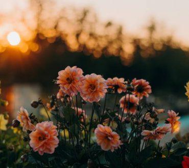 10 τρόποι που τα φυτά τονώνουν τη νοητική και συναισθηματική μας υγεία