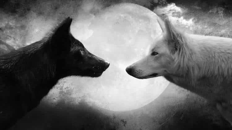 Οι δύο λύκοι μέσα μας: Μια σοφή ινδιάνικη παραβολή