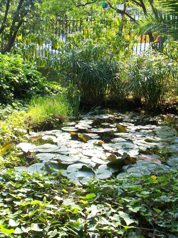 Ανοίγει για το κοινό ο ιστορικός βοτανικός κήπος του ΕΚΠΑ με πάνω από 200 είδη φυτών