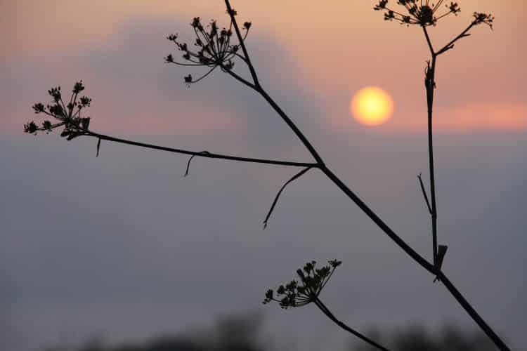 WMO: Η μέση παγκόσμια θερμοκρασία θα καταγράψει νέο υψηλό ρεκόρ τα επόμενα 5 χρόνια