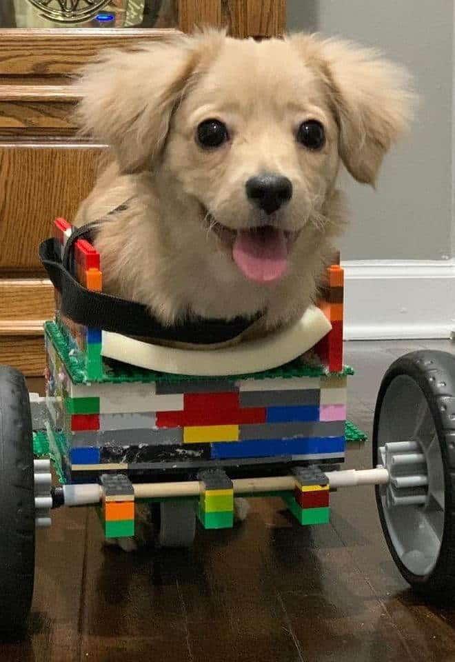 12χρονος κατασκεύασε αναπηρικό αμαξίδιο από lego για ένα υιοθετημένο κουτάβι