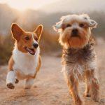 Πώς η Ολλανδία κατάφερε να γίνει η πρώτη χώρα χωρίς αδέσποτους σκύλους