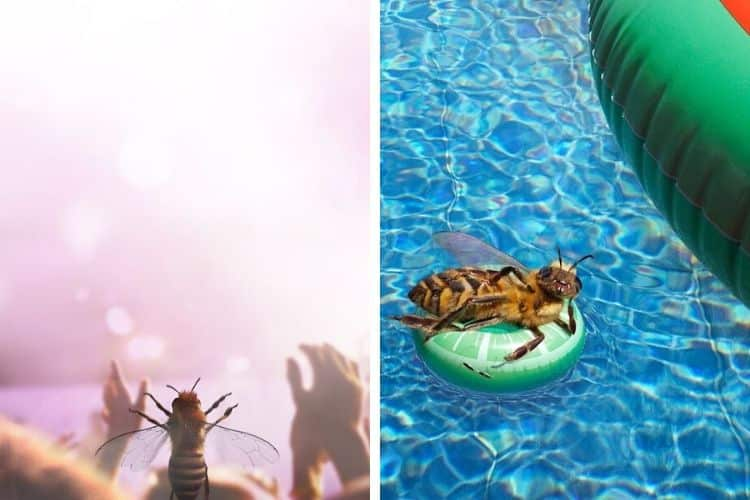 Η πρώτη μέλισσα influencer που προσπαθεί να σώσει το είδος της (Φωτογραφίες)