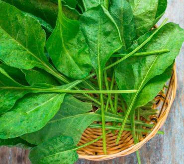 Τα 8 πιο υγιεινά πράσινα λαχανικά που αξίζει να προσθέσουμε στη σαλάτα μας