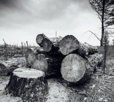 Η αποψίλωση του Αμαζονίου αυξήθηκε κατά 103% σε σχέση με πέρυσι