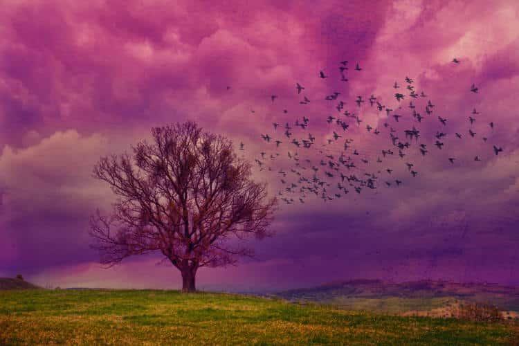 Όνειρα: Το μέσο έκφρασης των ασυνείδητων επιθυμιών μας