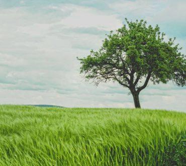 Πώς μεγαλώνεις ένα δένδρο με 40 διαφορετικά είδη φρούτων (Βίντεο)