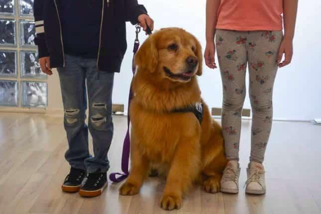 Titan: Ο πρώτος σκύλος θεραπευτής που βοηθά κακοποιημένα παιδιά