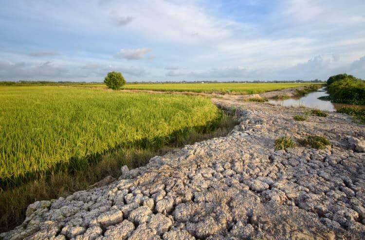 Έρευνα: Το 40% της χώρας θα οδηγηθεί σε ερημοποίηση αν δεν αντιμετωπίσουμε την κλιματική αλλαγή