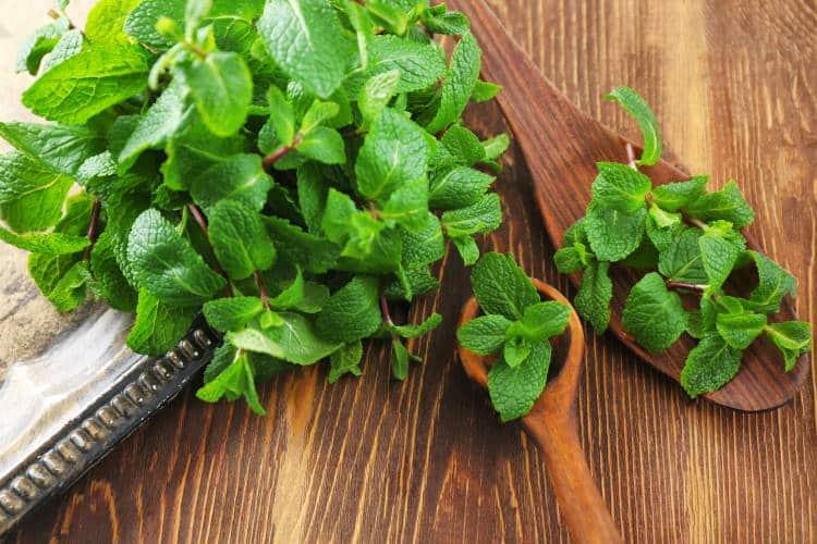 6 μπαχαρικά και βότανα που ενισχύουν την υγιή λειτουργία του εγκεφάλου